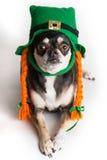 Cane del giorno di St Patrick sveglio Immagini Stock