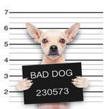 Cane del Mugshot Immagine Stock Libera da Diritti