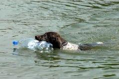 Cane del nuotatore Fotografia Stock