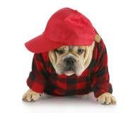 Cane del paese fotografia stock libera da diritti