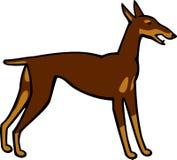 Cane del pinscher del doberman Immagine Stock Libera da Diritti