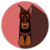 Cane del pinscher del doberman di vettore Illustrazione piana Fotografia Stock