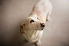 Cane del primo piano Fotografia Stock
