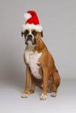 Cane del pugile in cappello della Santa Fotografie Stock