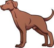 Cane del puntatore Fotografia Stock