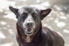 Cane del ritratto Fotografia Stock