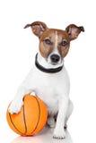 Cane del vincitore della sfera del cestino Fotografie Stock Libere da Diritti