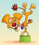 Cane dell'acrobata Fotografie Stock Libere da Diritti