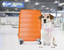 Cane dell'aeroporto Fotografie Stock