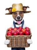 Cane dell'agricoltore Fotografia Stock Libera da Diritti