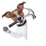 Cane dell'artigiano immagini stock libere da diritti