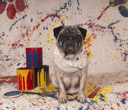 Cane dell'artista Fotografia Stock