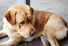 Cane dell'azienda agricola Fotografie Stock