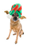 Cane dell'elfo Immagine Stock