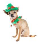 Cane dell'elfo Fotografia Stock
