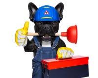 Cane dell'idraulico con il tuffatore fotografia stock libera da diritti