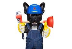 Cane dell'idraulico con il tuffatore immagini stock