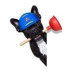 Cane dell'idraulico con il tuffatore fotografia stock