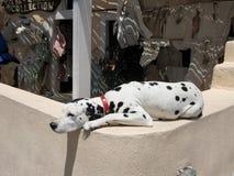 Cane dell'isola di Santorini Fotografia Stock Libera da Diritti