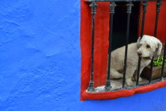Cane dell'osservatore immagini stock libere da diritti