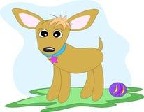 Cane della chihuahua con la sfera del giocattolo Fotografia Stock Libera da Diritti