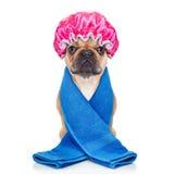 Cane della doccia Fotografia Stock Libera da Diritti