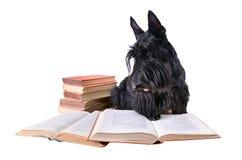Cane della lettura fotografia stock libera da diritti