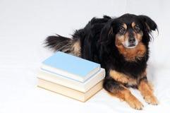 Cane della lettura Fotografie Stock