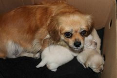 Cane della madre con i suoi cuccioli immagine stock libera da diritti