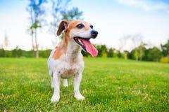 Cane della natura dell'aria fresca Fotografia Stock Libera da Diritti