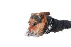 Cane della neve Fotografia Stock Libera da Diritti