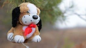 Cane della peluche sui rami del pino stock footage