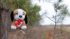 Cane della peluche sui rami del pino archivi video