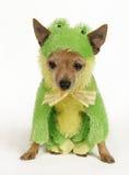 Cane della rana Fotografia Stock