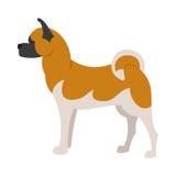 Cane della razza di Akita Fotografia Stock Libera da Diritti