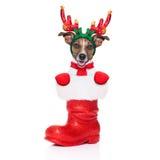 Cane della renna immagini stock
