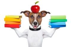 Cane della scuola Immagini Stock