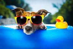 Cane della spiaggia