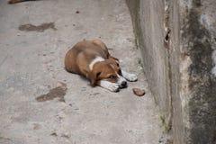 Cane della via Immagine Stock Libera da Diritti