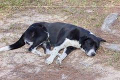 Cane della via di sonno Immagine Stock Libera da Diritti