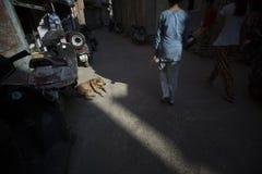 Cane della via in raggio di luce Fotografie Stock Libere da Diritti