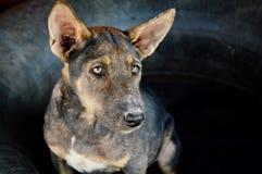 Cane della via in Tailandia Immagini Stock