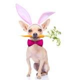 Cane delle orecchie del coniglietto immagine stock
