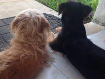 Cane delle sorelle di Kim e della bambina fotografie stock libere da diritti