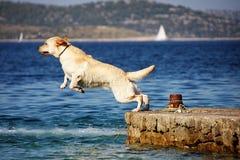 Cane di acqua Immagini Stock