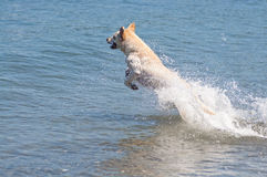 Cane di acqua felice fotografie stock libere da diritti