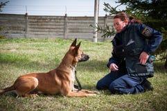 Cane di addestramento del poliziotto Fotografie Stock