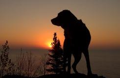 Cane di alba Fotografia Stock