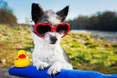 Cane di amore di estate Fotografia Stock