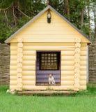 Cane di animale domestico che si siede al grande canile al cortile posteriore Fotografie Stock Libere da Diritti